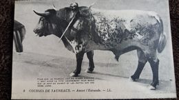 CPA COURSES DE TAUREAUX AVANT L ESTOCADE 8 ND ED LEVY POUR BONNE POSITION DU TAUREAU - Toros
