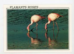 CPM: FLAMANTS ROSES - - Vögel