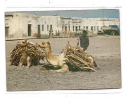 DJIBOUTI  SUR LA PLAGE DE TADJOURA (DROMADAIRE) - Dschibuti