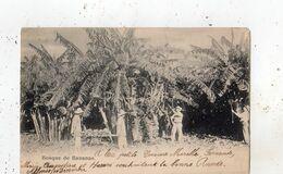 PARAGUAY BOSQUE DE BANANAS (CARTE PRECURSEUR ) - Paraguay