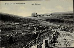 Cp Aitern In Bade Württemberg, Wegepartie, Der Belchen, Inhaber J. Stiefvater, Kühe - Otros