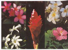 Les Fleurs De Tahiti - - Tahiti