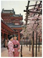 (G 11) Japan To Australia (with Stamp /1977 ) Cherry Blossom At Shrine - Kyoto