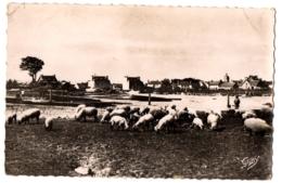 CPSM PF 35 - LE VIVIER SUR MER (Ille Et Vilaine) - 42. Moutons De Pré-Salé Sur Les Grèves - France