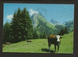 74 Bernex / La Dent D'Oche Et Ses Alpages ( Bovins,vache ) - Non Classificati