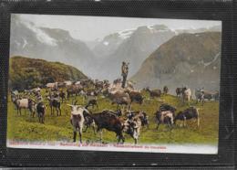 AK 0537  Ziegen-Herde - Sammlung Zur Heimkehr ( Schweiz ) Um 1907 - Autres
