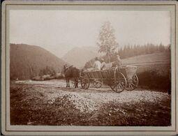 ! 1 Altes Foto Auf Hartpappe, Photo, Bei Javorina, Hohe Tatra, Slowakei, Kutsche, 1894, Format Ca. 9,3 X 12,2 Cm - Slovacchia