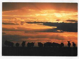 (RECTO / VERSO) KENYA - AFRICAN WILDLIFE - WILDERBEESTE - BEAU TIMBRE - CARTE VOYAGEE FORMAT 120 X 170 Mm - Kenya