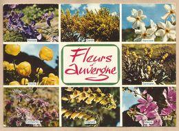 CPM Fleurs D'Auvergne - Pensée - Genêt - Narcisse - Trolle - Centaurée - Digitale - Mauve - Gentiane - Flores