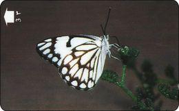 OMAN GPT Phonecard   Butterfly Schmetterling - Oman