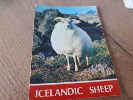 Postcard - Iceland     (V 34852) - Iceland