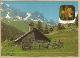 CPM En Montagne La Jonquille - Buron - N°15.511 Images De Chez Nous - Flores