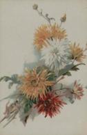 Chrysanthèmes - Flores