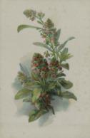 Plante à Identifier - Flores