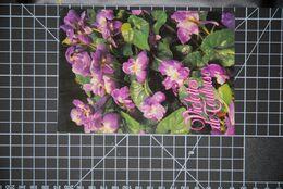 CP, TOULOUSE, Cité Des Violettes, - Flores