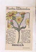 CARTES NON POSTALES PLANTES MEDICINALES, ARNICA - Heilpflanzen