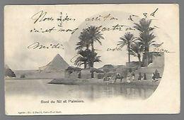 Bord Du Nil Et Palmiers - Egypte