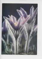Anémone Pulsatille - Faune Et Flore N°001744 Théojac Cp Vierge - Flores