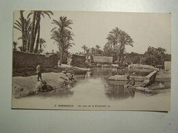 DAFRIQUED MAROC  MARRAKECH  Un Coin De La Palmeraie - Marrakech