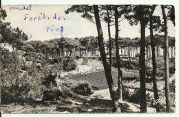 85  LA TRANCHE SUR MER   Forêt De Pins    Cpsm Pf Voyagée En 1953 - La Tranche Sur Mer