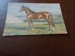 B772  Pitture E Quadri K.volkers Cavallo Non Viaggiata Cm14x9 - Malerei & Gemälde