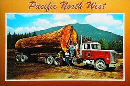"CAMION Américain Fir Log Truck -  Pacific North West (Printed Oregon U.S.A.)  - ""G & D Co Inc Transporter"" - Camion, Tir"
