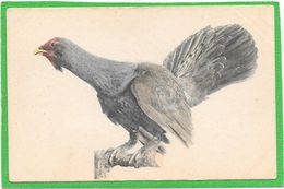 OISEAUX - ??????- Viennoise B.K.W.I. 548-38- Illustration - Birds