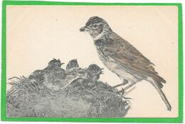 OISEAUX - Bergeronnette -  Viennoise B.K.W.I. 548-31 - Illustration - Birds