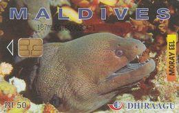 Maldives, 187MLDGIB, Moray Eel, 2 Scans - Maldiven