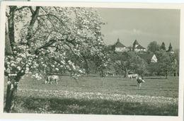 Winterthur; Schloss Kyburg (Frühling) - Nicht Gelaufen. (Männadorf & Stäfa) - ZH Zurich