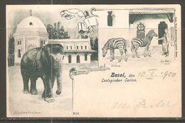 Carte P De 1900 ( Basel / Zoologischer Garten ) - BS Bâle-Ville
