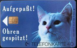 ALLEMAGNE  -  Cats  - Catsan   -  40 DM - Deutschland