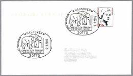 CALIFA Y FARINA - ELEFANTES ZOO DE HANNOVER - Elephants. Hannover 2005 - Elefantes