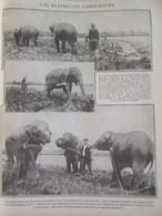 Guerre  14-18 LAVILLEDIEU  Les éléphants Laboureurs    Cirque Pinder - Vieux Papiers