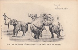 Barnum & Baily Circus Group Of Elephants Performance C1900s Vintage Postcard #1 - Circus