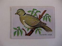 Bird Tourterelle Turque Portugal Portuguese Pocket Calendar 1987 - Calendriers