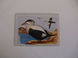 Bird Eider Portugal Portuguese Pocket Calendar 1987 - Calendriers