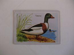 Bird Tadorne Portugal Portuguese Pocket Calendar 1987 - Calendriers