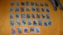 LOT DE 37 PETITS CHROMOS OU IMAGES ANCIENNES DATE ?../ CONCOURS DES TROIS ALPHABETS CHANTE CLAIR..OISEAUX, ANIMAUX - Trade Cards