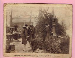 Verkoop Van Dennenboompjes Op De Groenplaats Te Antwerpen - F. Arbres & Arbustes