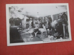 Scio  Ohio   Pottery Wildlife Museum     Ref 4268 - Animaux & Faune