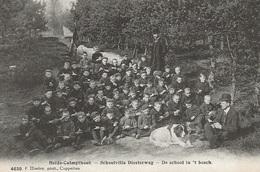 46  Kalmthout Heide Schoolvilla Diesterweg De School In 't Bosch Met Hond Bellq  Uitgave Hoelen 4630 - Kalmthout