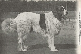 48  Kalmthout Heide Schoolvilla Diesterweg Hond Bella  Uitgave Hoelen 4635 - Kalmthout