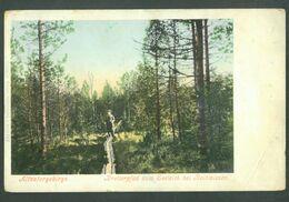 Altvatergebirge  (High Ash Mountains / Hrubý Jeseník ). Bretterpfad  Zum Seeteich Bei Reihweisen, Maybe CZECH REPUBLIC - Repubblica Ceca