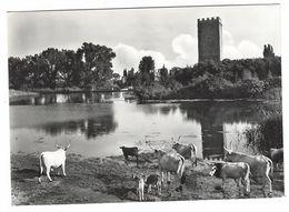 CLB015 - NORMA LATINA LAGO DI NINFA 1950 CIRCA - Other Cities