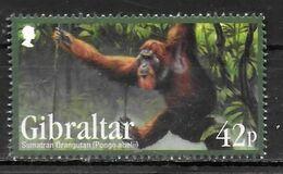 GIBRALTAR  N° 1436  * *  Especes Menacees Singes Ourang Outan - Monkeys