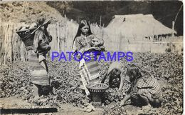 139462 PHILIPPINES COSTUMES NATIVE COLLECTING THE HARVEST POSTAL POSTCARD - Philippines