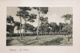 Cartolina - Pescara - La Pineta - 1930 Ca. - Pescara