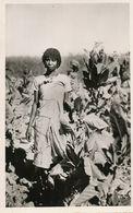 Real Photo Majunga  Tobacco Collecting . Récolte Du Tabac En Brousse . Edit Charifou . Black Woman Working - Madagascar
