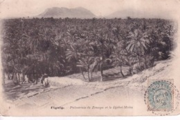 ALGERIE(FIGUIG) ARBRE(ZENAGA) - Algeria
